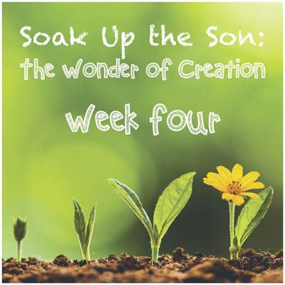 Soak Up the Son - Week Four: Earth, Seas, & Plants