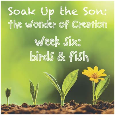 Soak Up the Son - Week 6: Birds & Fish