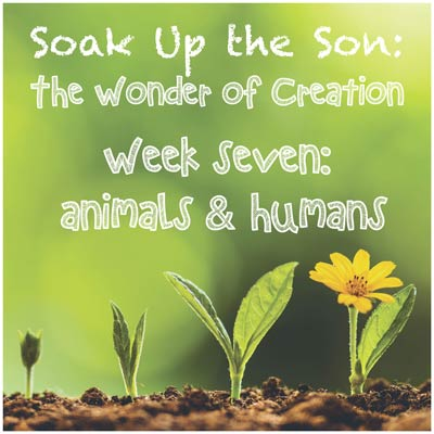 Soak Up the Son - Week 7: Animals & Humans
